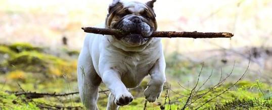 Throw The Stick!